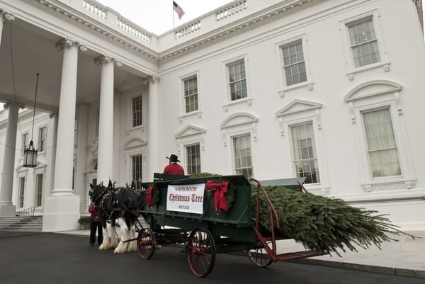 Michelle Obama with Daughters Malia and Sasha Receive the White House Christmas Tree on November 26, 2010