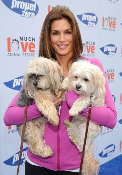 Cindy Crawford and Propel Zero raise money for Much Love Animal Rescue in Malibu to celebrate how our four-legged friends help to keep us active and healthy at Church Estates Vinyard on April 2, 2011 in Malibu, California.