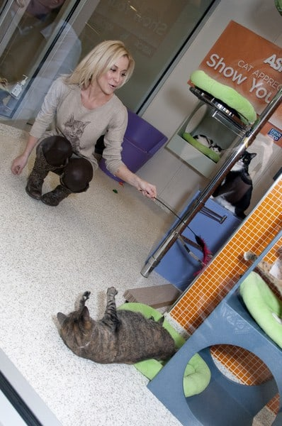 Kellie Pickler Unveils the Fresh Step Limited Edition Cat Sweater Benefiting the ASPCA in New York City on January 24, 2012